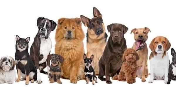 الكلاب.. مرافقو الرؤساء والمكفوفين وأفضل الأصدقاء