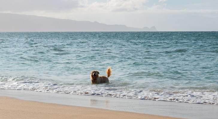 قصة حقيقية تشبه سيناريو الأفلام..كلب سبح 11 ساعة لإنقاذ صاحبه