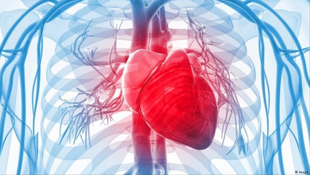 طابعة ثلاثية الأبعاد لإنقاذ قلب الإنسان