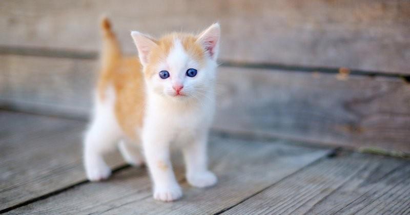 محبو هذه الحيوانات يميلون أكثر إلى الخيانة والقطط على رأس القائمة