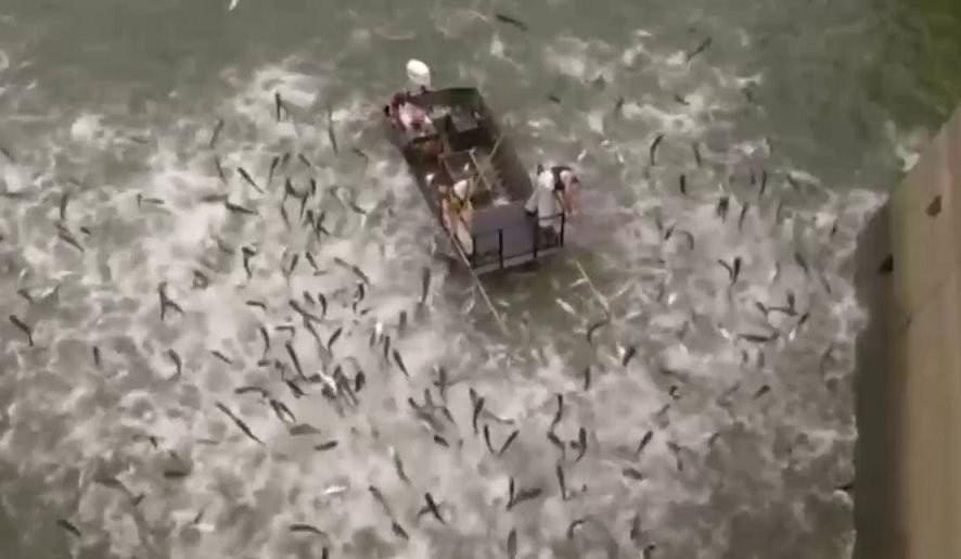 بالفيديو- بعد صعقة كهربائية..مئات الأسماك تتطاير فوق بحيرة صناعية