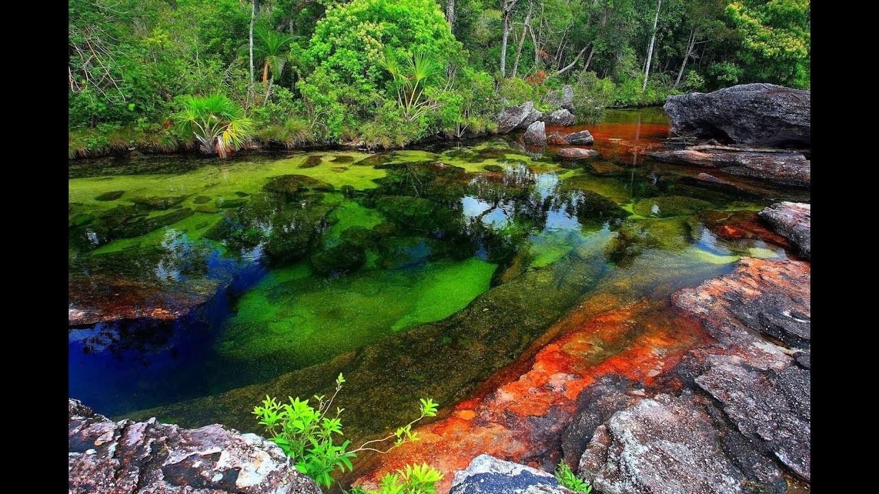 نهر يتدفق بـ5 ألوان في كولومبيا.. بالفيديو