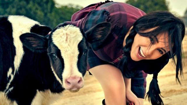 تخلص من ضغوطك النفسية...عن طريق البقر