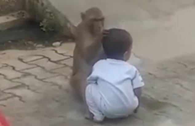 خطف طفل على يد قرد..بالفيديو